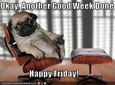 funny-friday puppy
