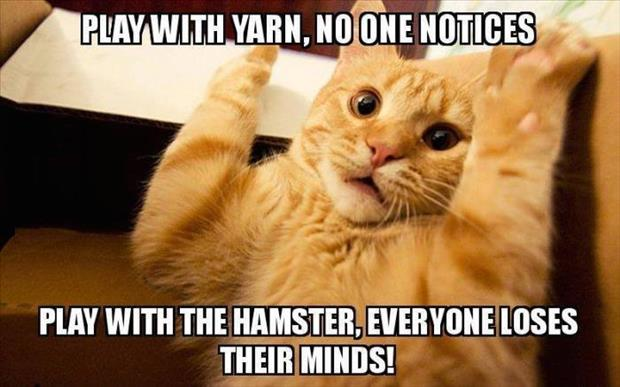 cat-plays-with-yarn