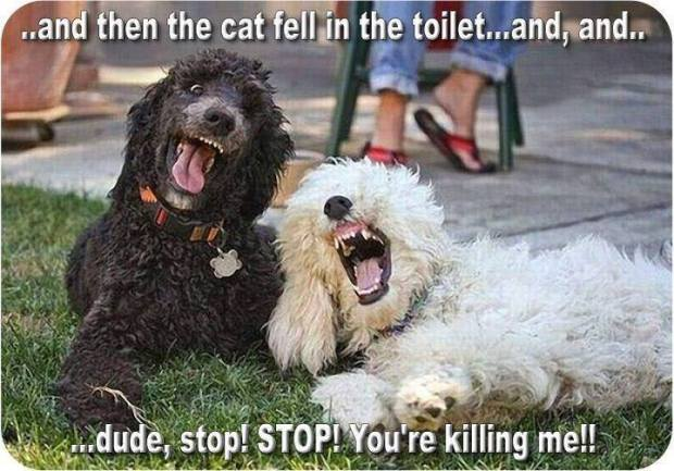 dog-jokes-poodles