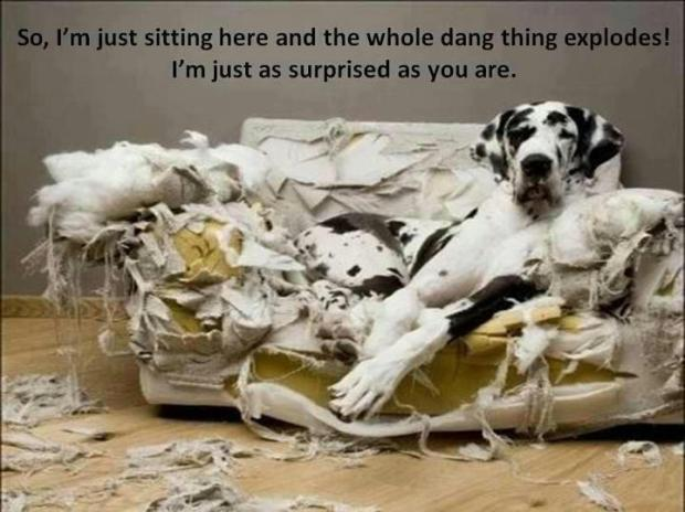 Great-Dane-and-the-exploding-couch-Funny-dog-photo-with-captions